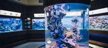 Гдыньский океанариум
